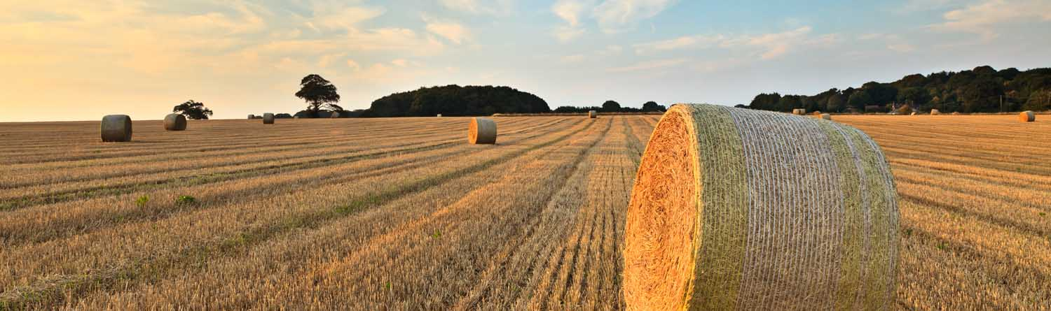 Haybales image for header